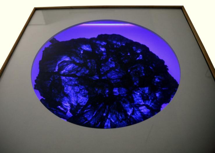 Jellyfish-vitrine_2